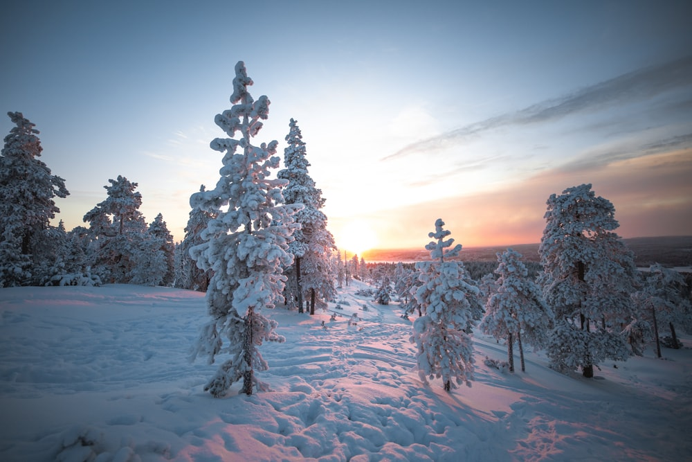 snow covered trees during night time
