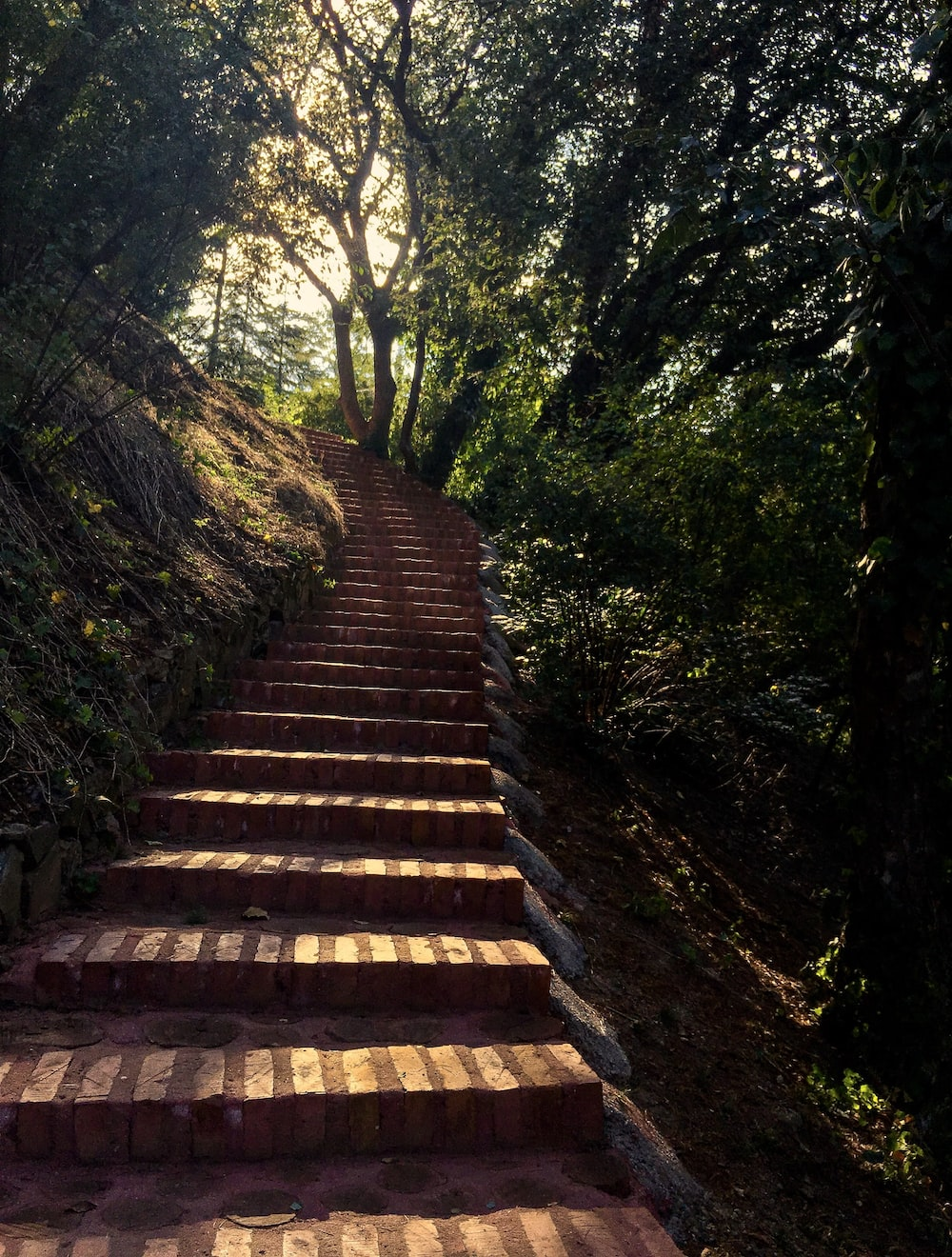 brown wooden stairs between green trees during daytime