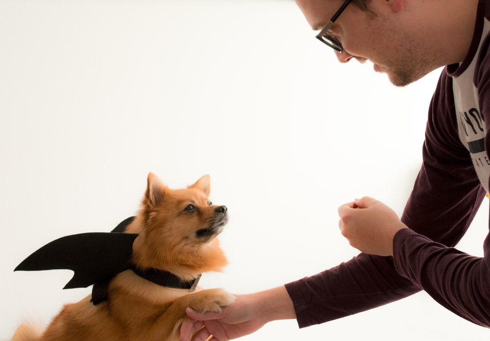 man in black long sleeve shirt holding brown and black pomeranian puppy