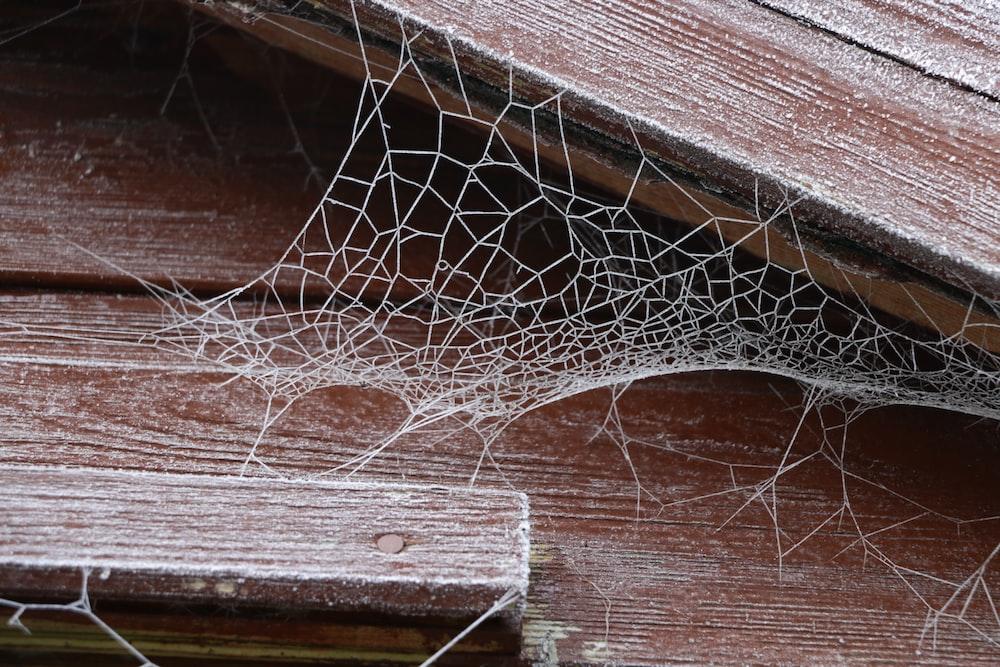 spider web on brown wooden plank