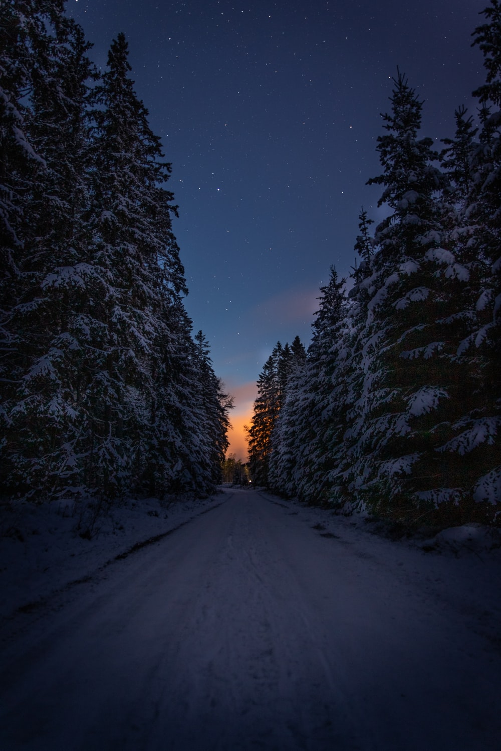 snow covered road between trees during night time