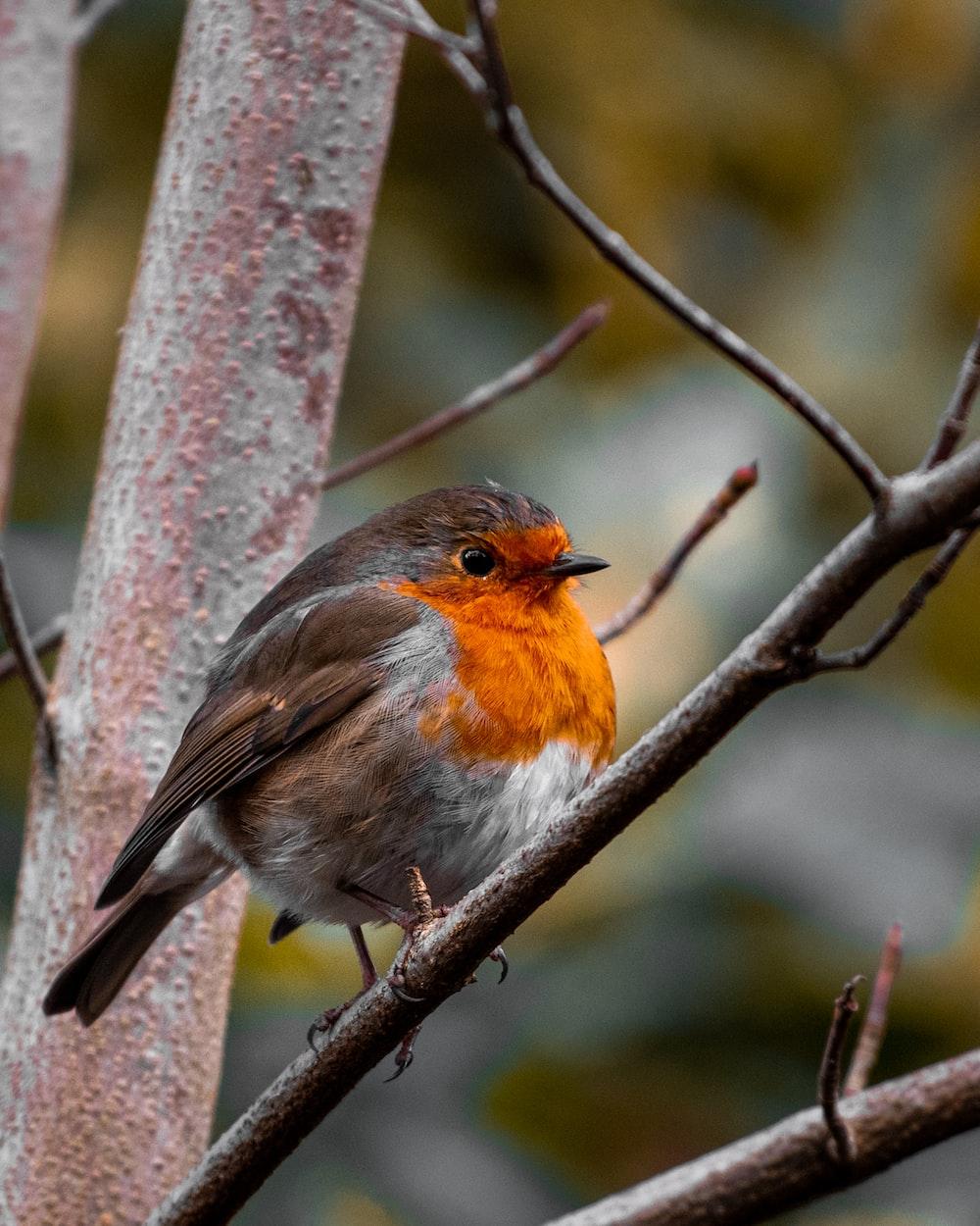orange and gray bird on tree branch