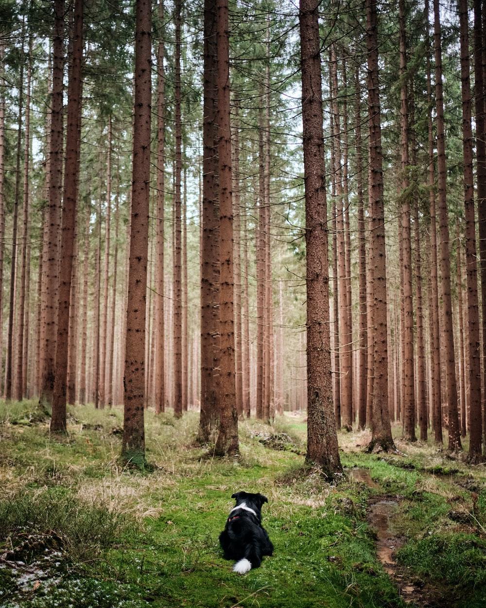 black labrador retriever on green grass field near brown trees during daytime