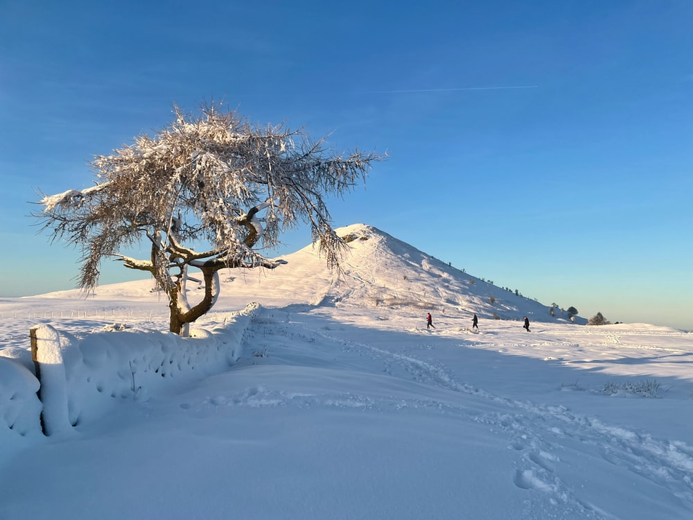 green tree on white snow covered field under blue sky during daytime