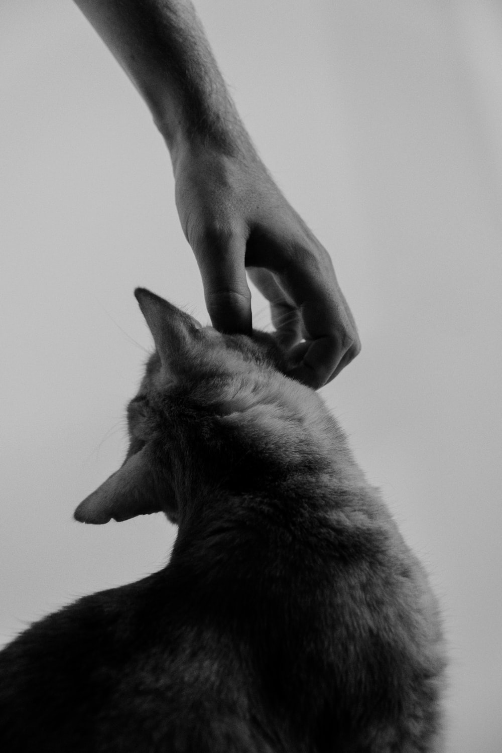 grayscale photo of person holding cat