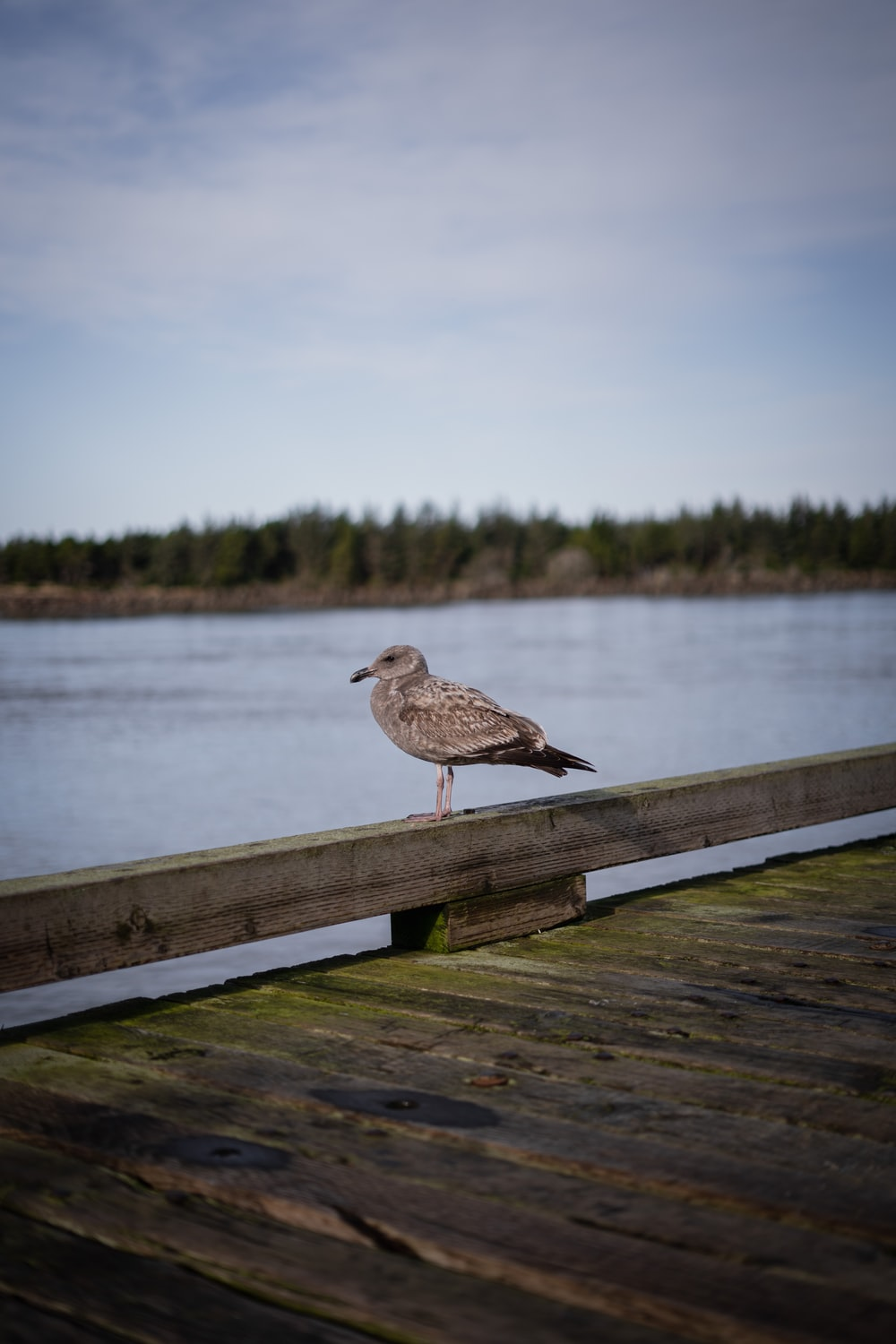 brown bird on brown wooden fence near body of water during daytime
