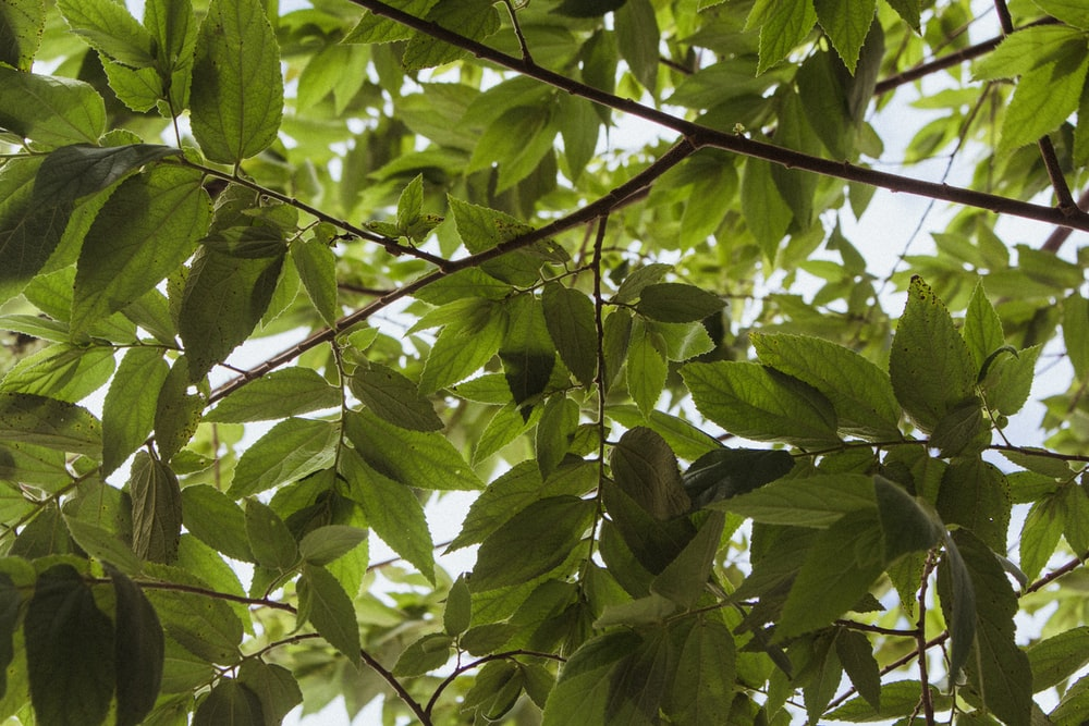 green leaves on tree branch during daytime