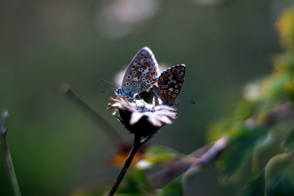 blue and white butterfly perched on brown stick in close up photography during daytime