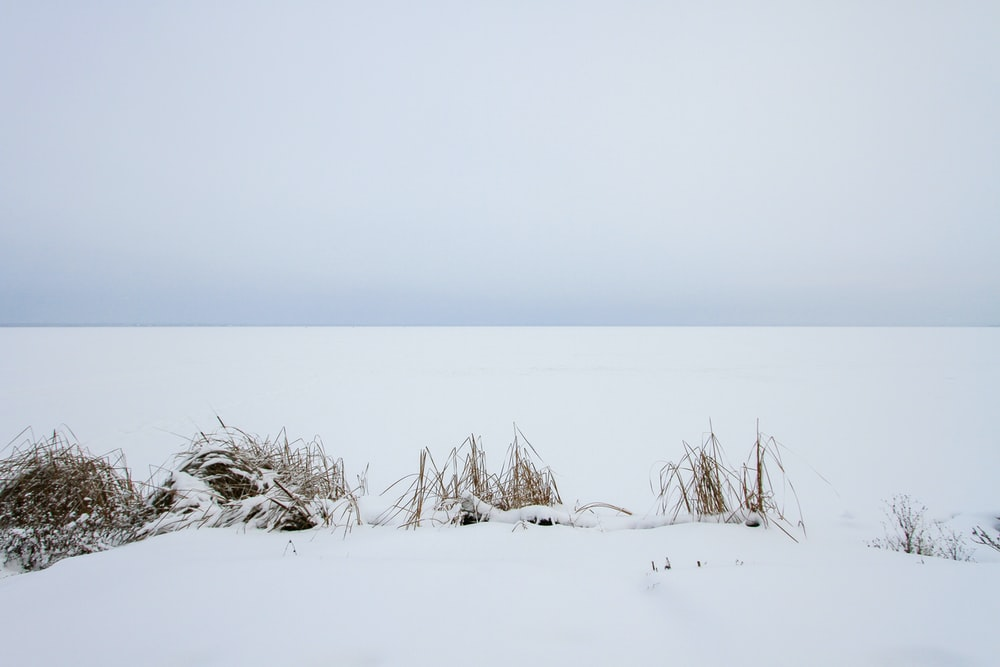 white snow covered field during daytime