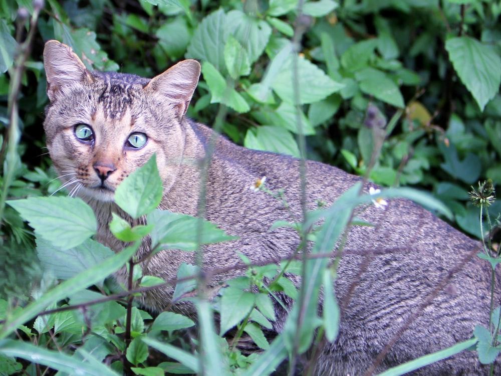brown tabby cat on green grass