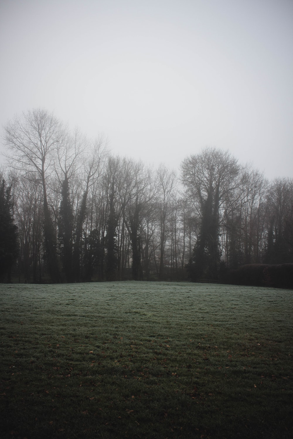 green grass field with bare trees under white sky during daytime