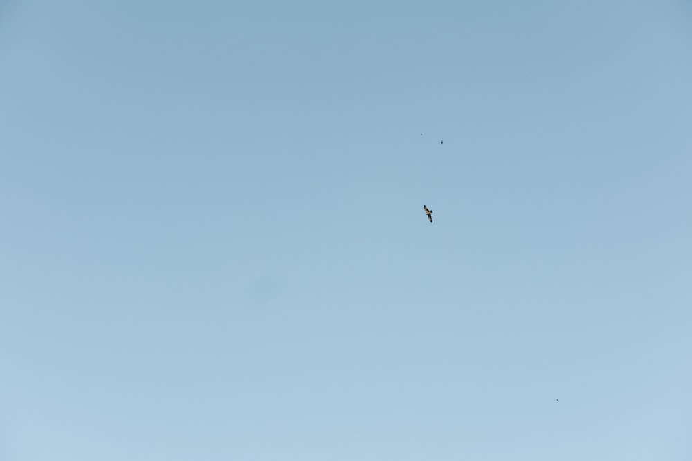 black bird flying under blue sky during daytime