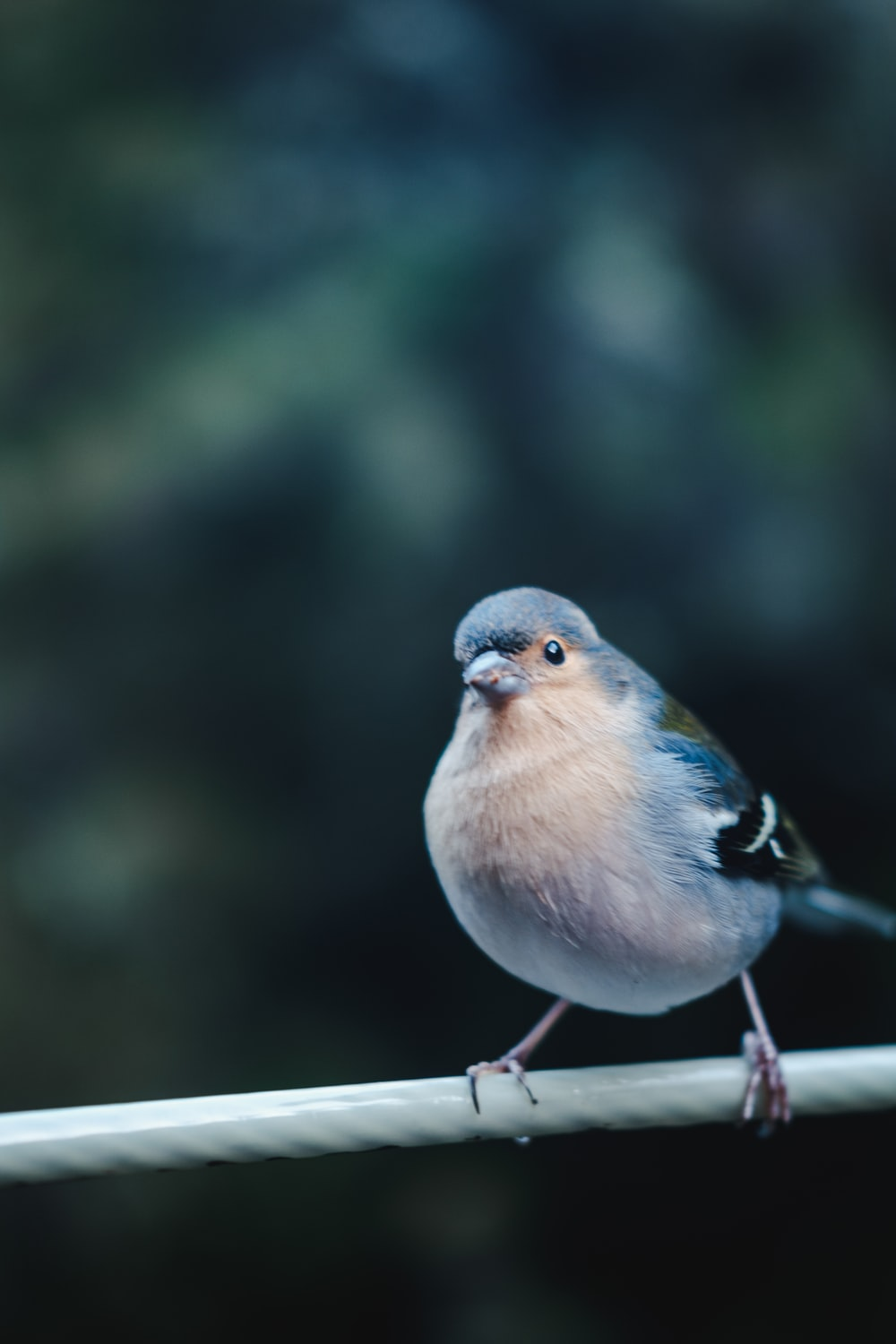 blue and white bird on brown wooden stick