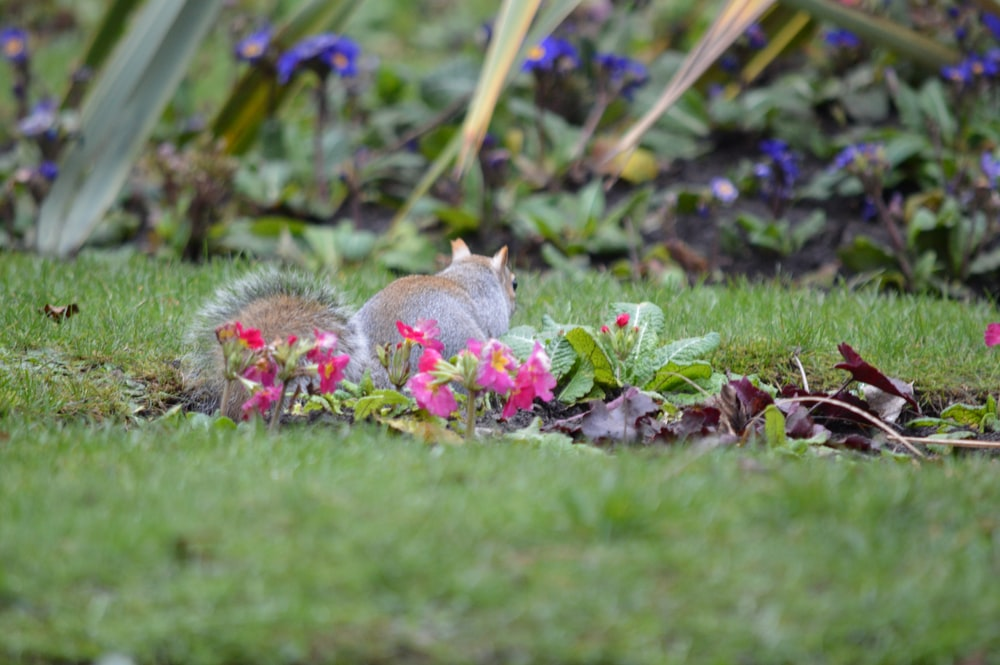 gray squirrel on green grass during daytime