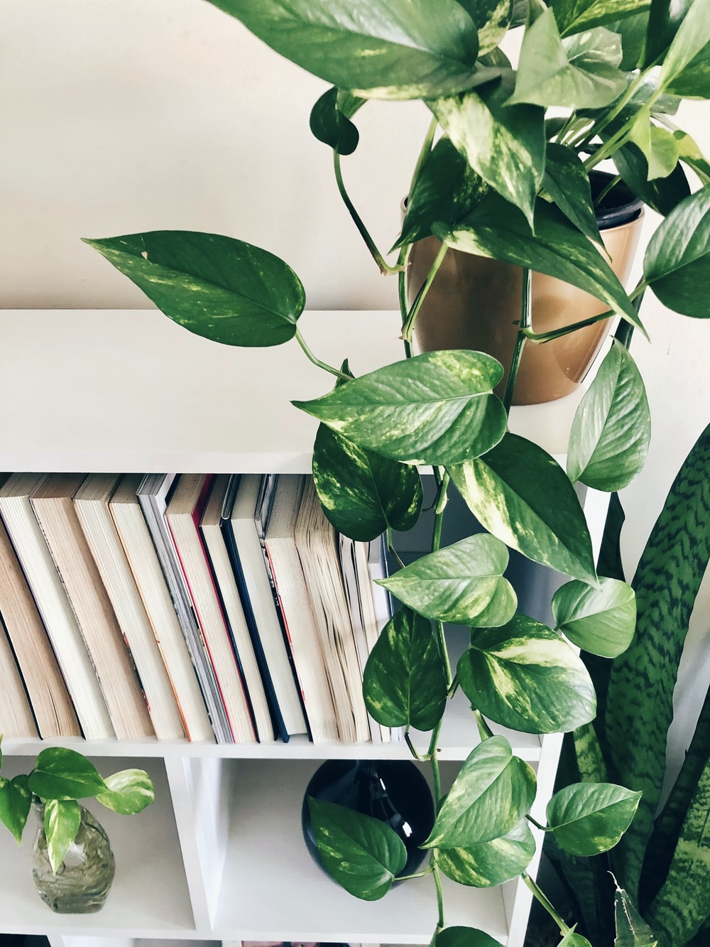 green plant beside white wooden book shelf