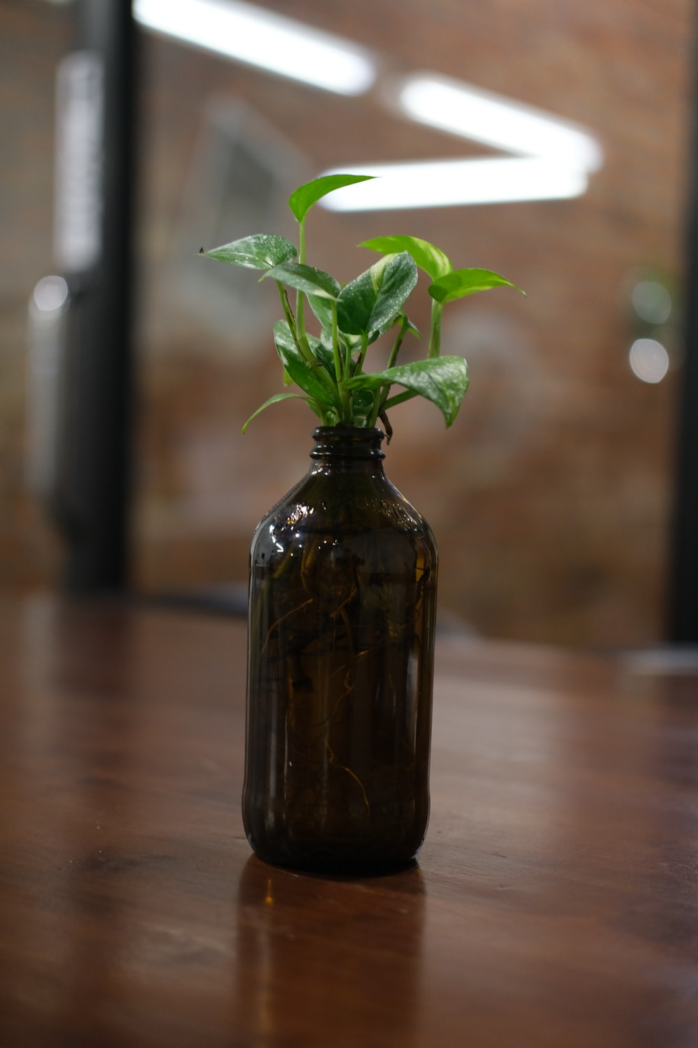 green plant in brown glass bottle