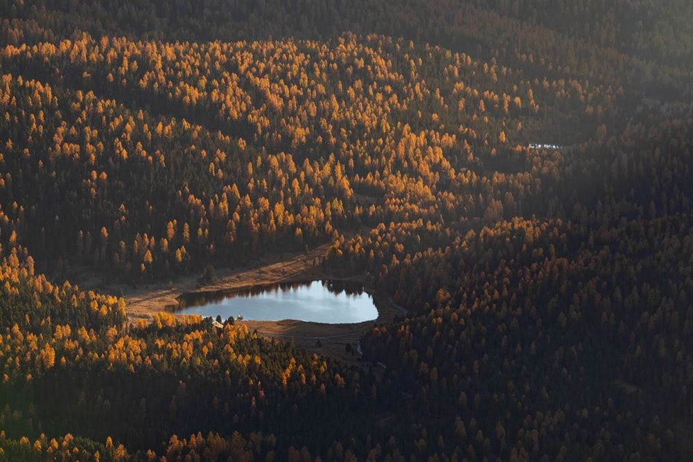 aerial view of green trees near lake during daytime