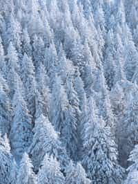 Winter's breeze stories