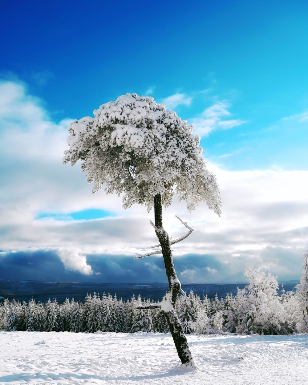 white tree under blue sky during daytime
