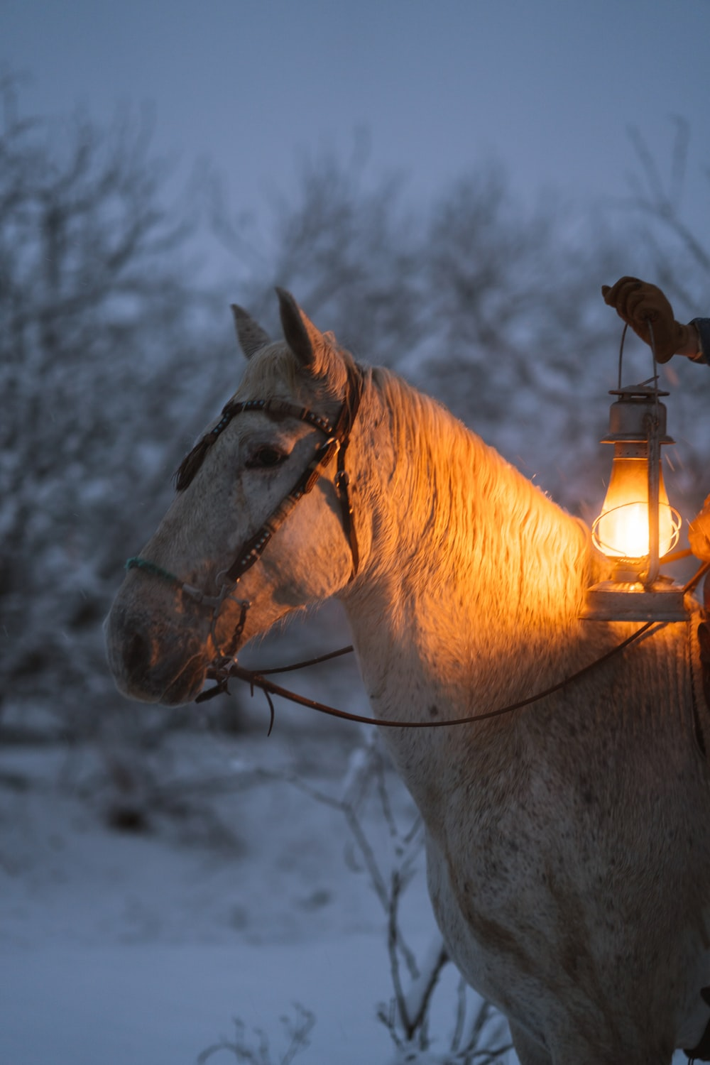 brown horse with yellow string lights on head
