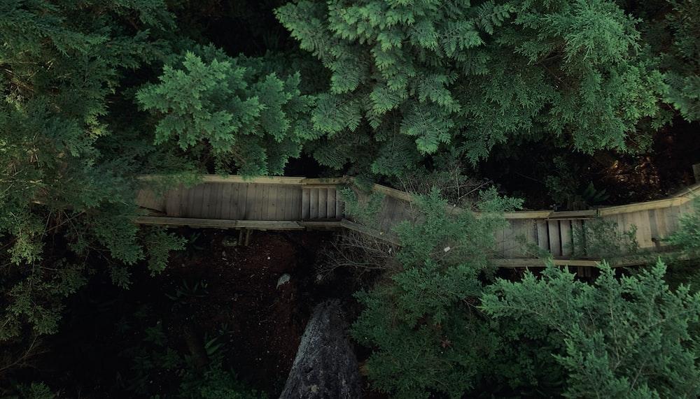 green trees near brown wooden bridge