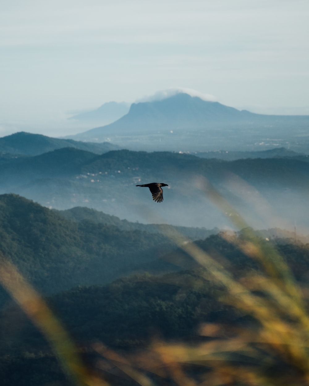 black bird flying over the mountain during daytime