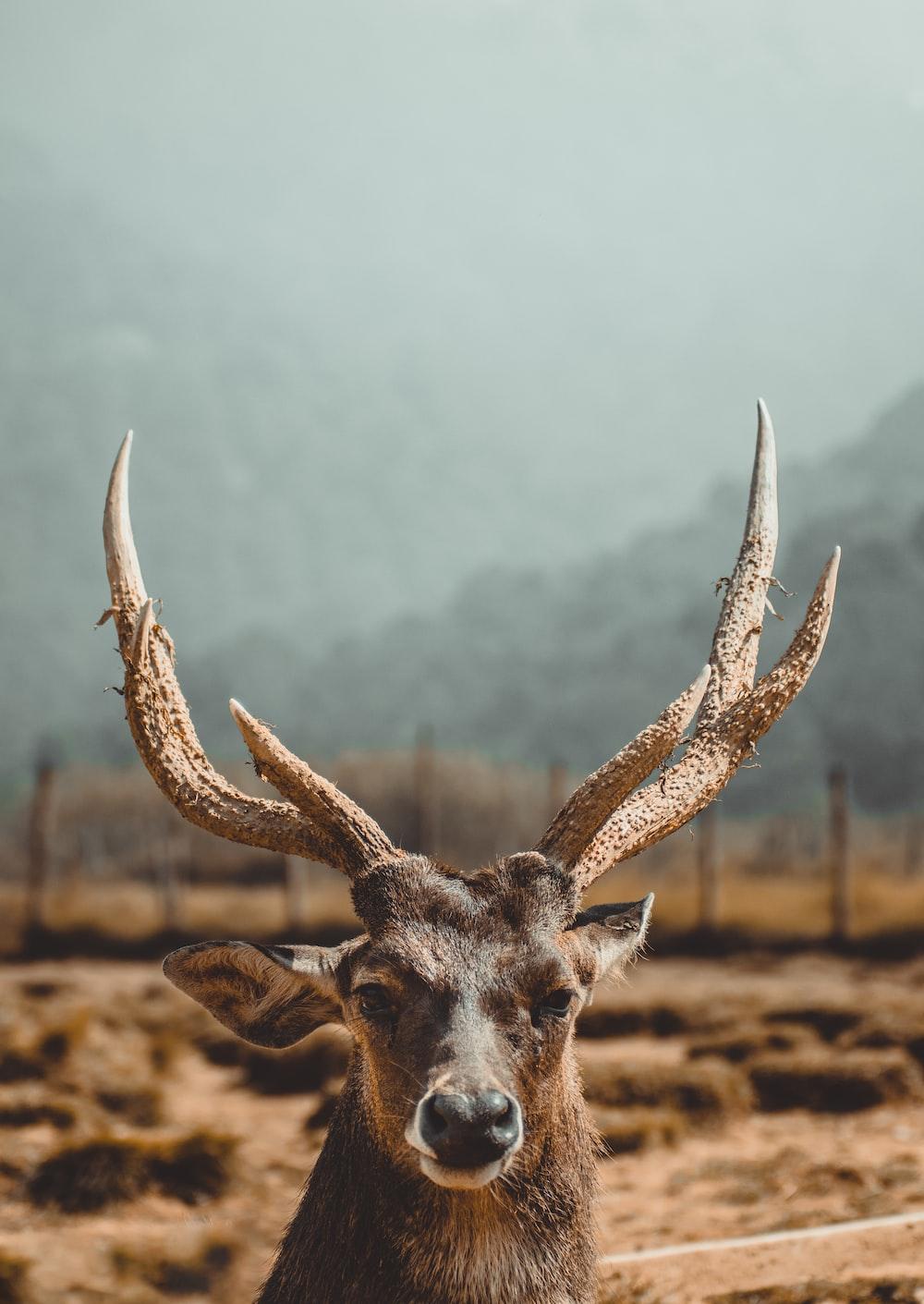 brown deer on brown field during daytime