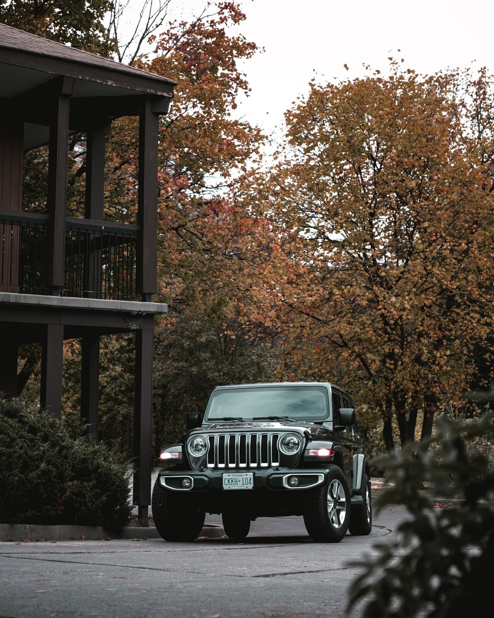 black jeep wrangler parked near brown tree during daytime