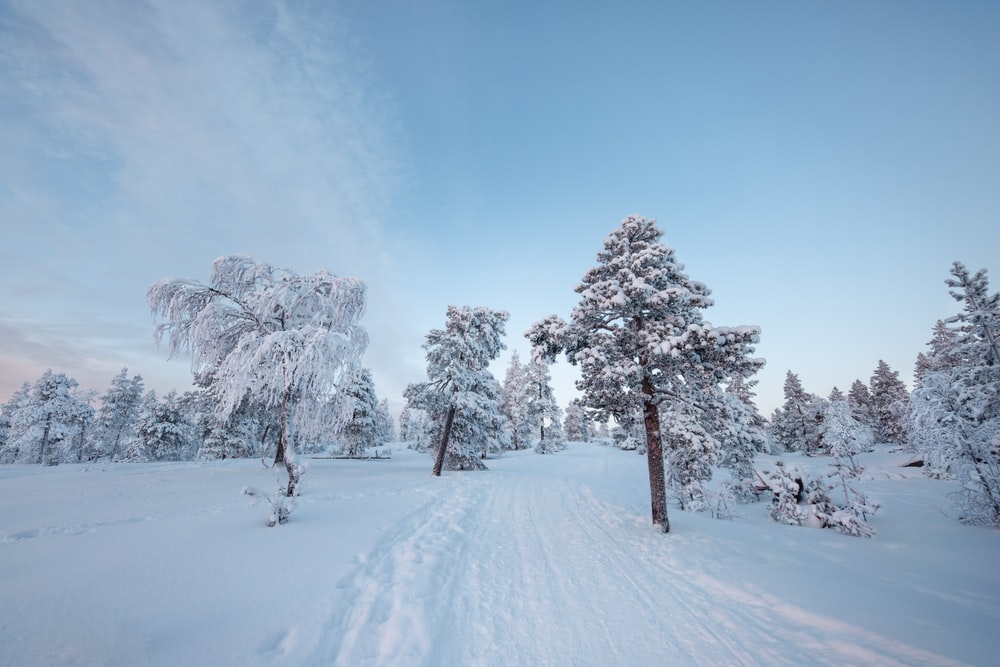 snow covered trees and mountain during daytime
