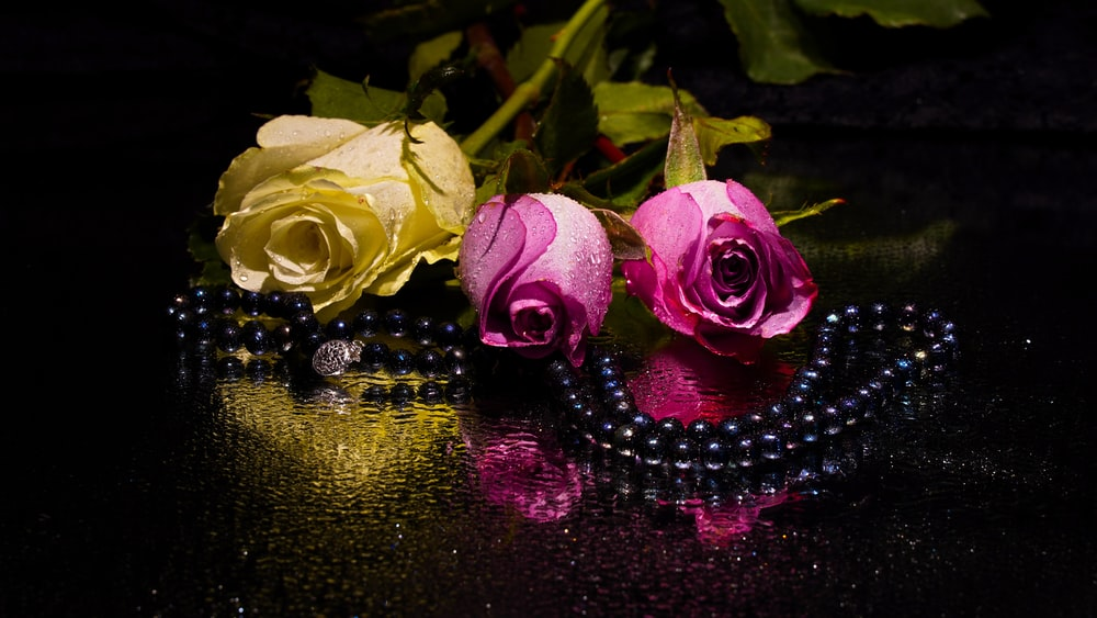 pink roses on water with black beaded necklace