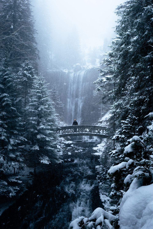 bridge over river between trees