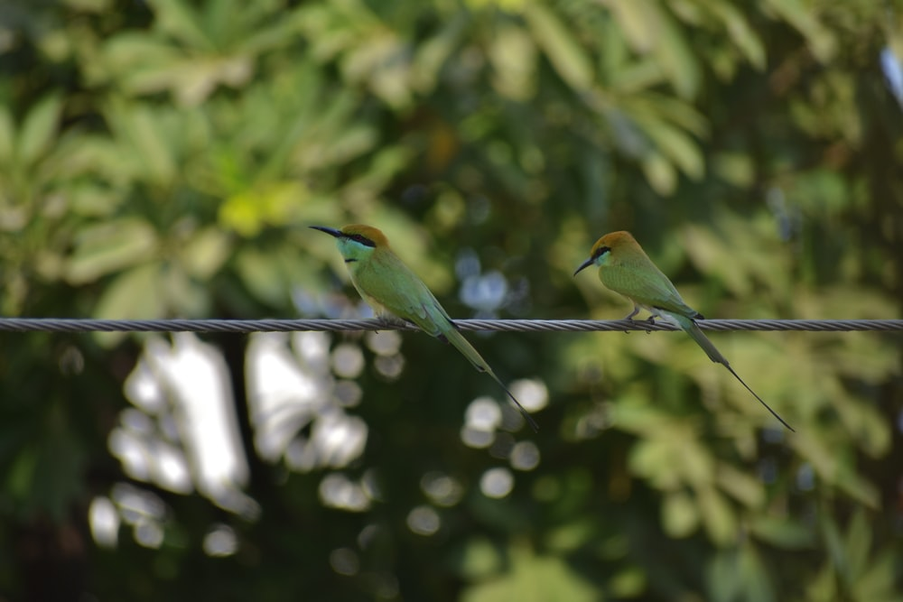 green and yellow bird on black wire during daytime