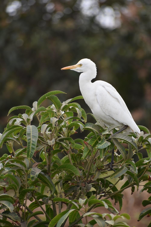 white bird on green plant during daytime