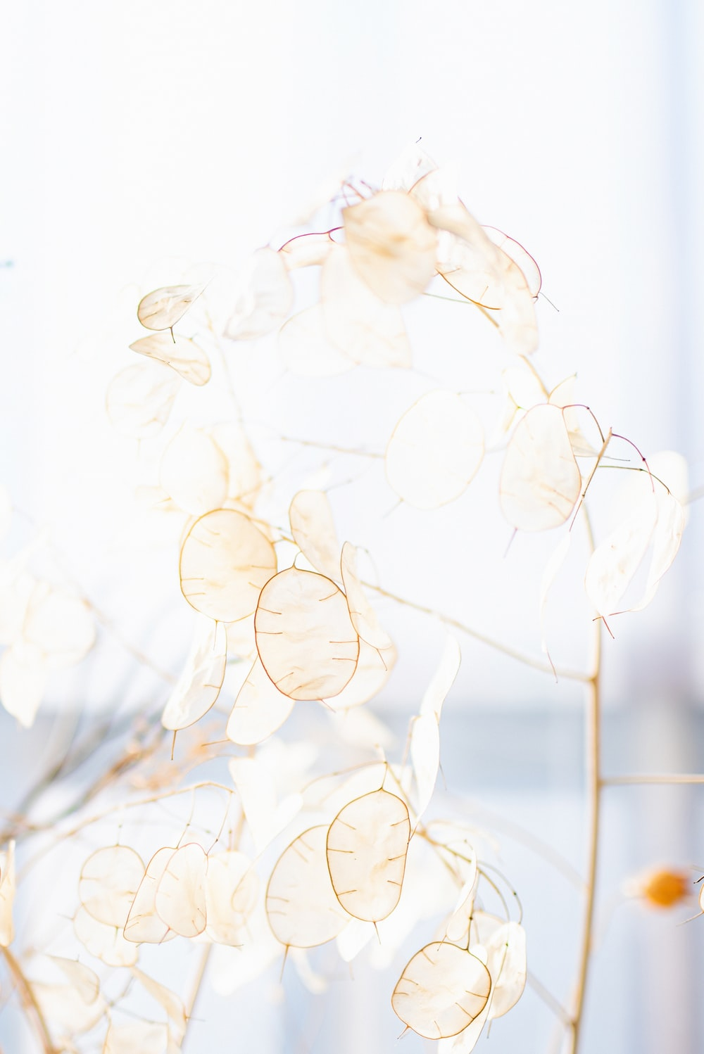 White Aesthetic Pictures Download Free Images On Unsplash