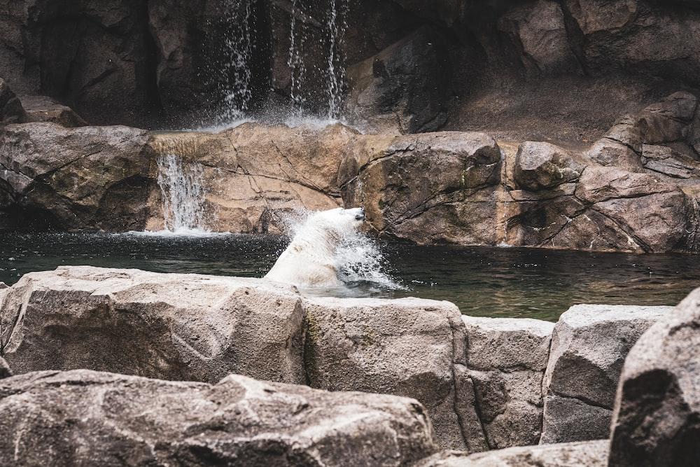 white polar bear on water