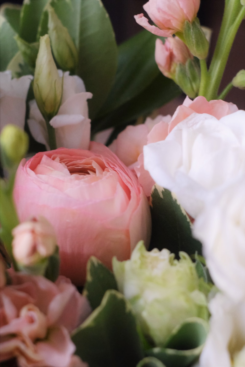 white and pink roses in bloom
