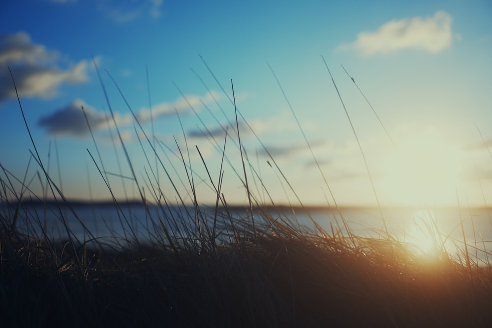 silhouette of grass near sea during sunset