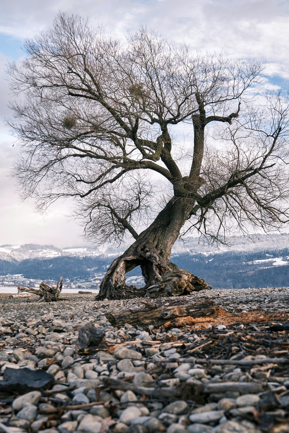brown tree on gray sand near body of water during daytime