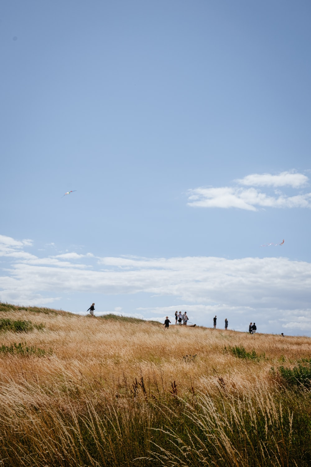 group of people walking on brown grass field during daytime