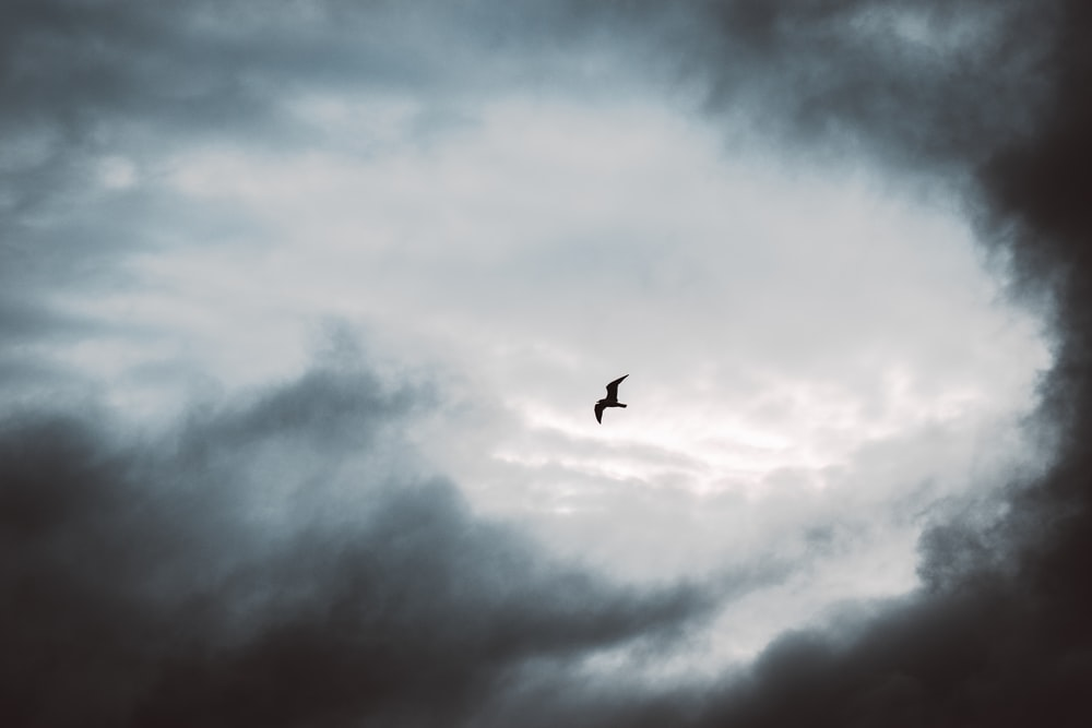 bird flying under white clouds during daytime