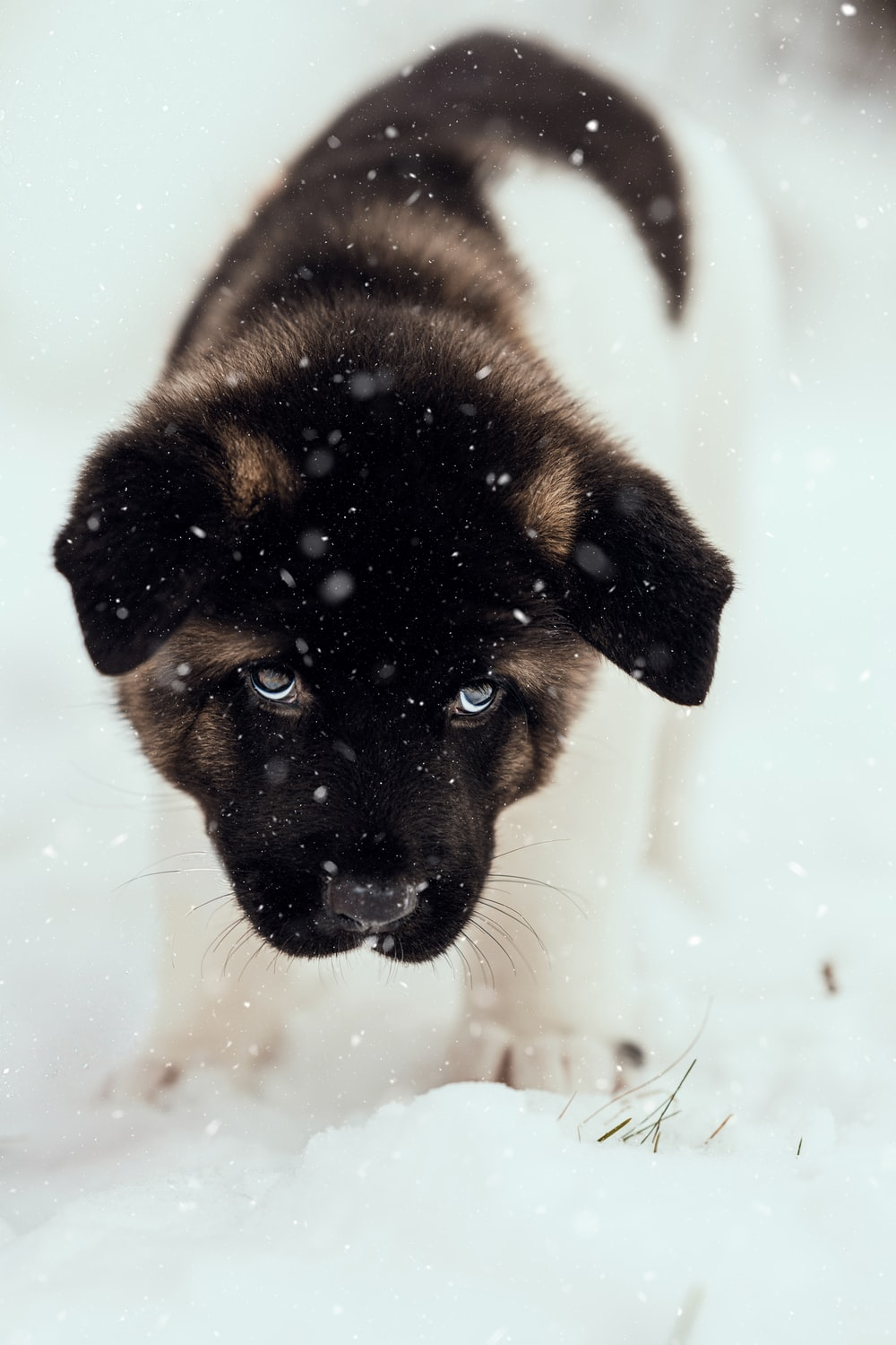 black and tan german shepherd puppy on snow covered ground during daytime