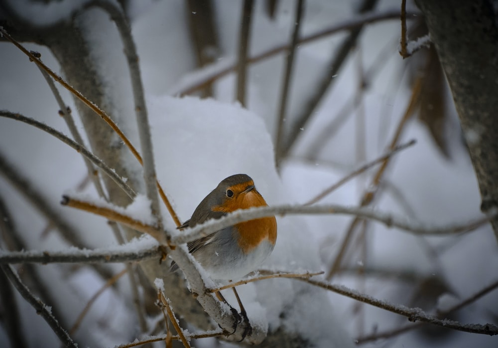 white yellow and gray bird on tree branch covered with snow during daytime