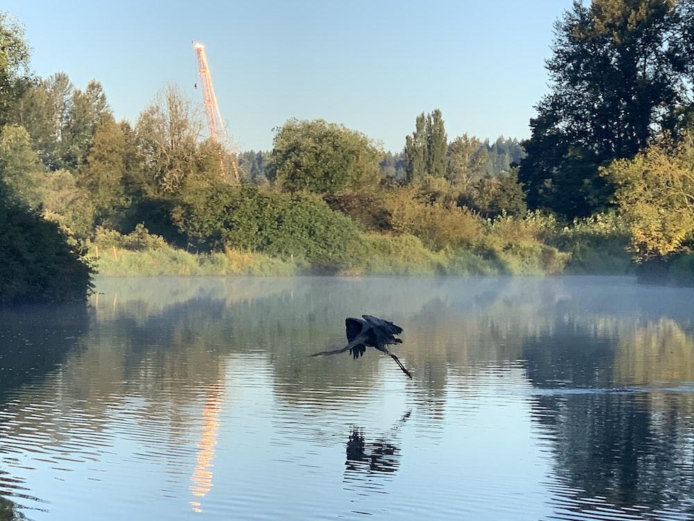 black duck on lake during daytime