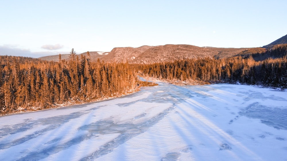 brown trees on snow covered ground during daytime