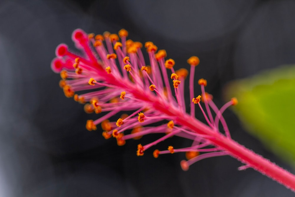 pink and yellow flower in macro lens