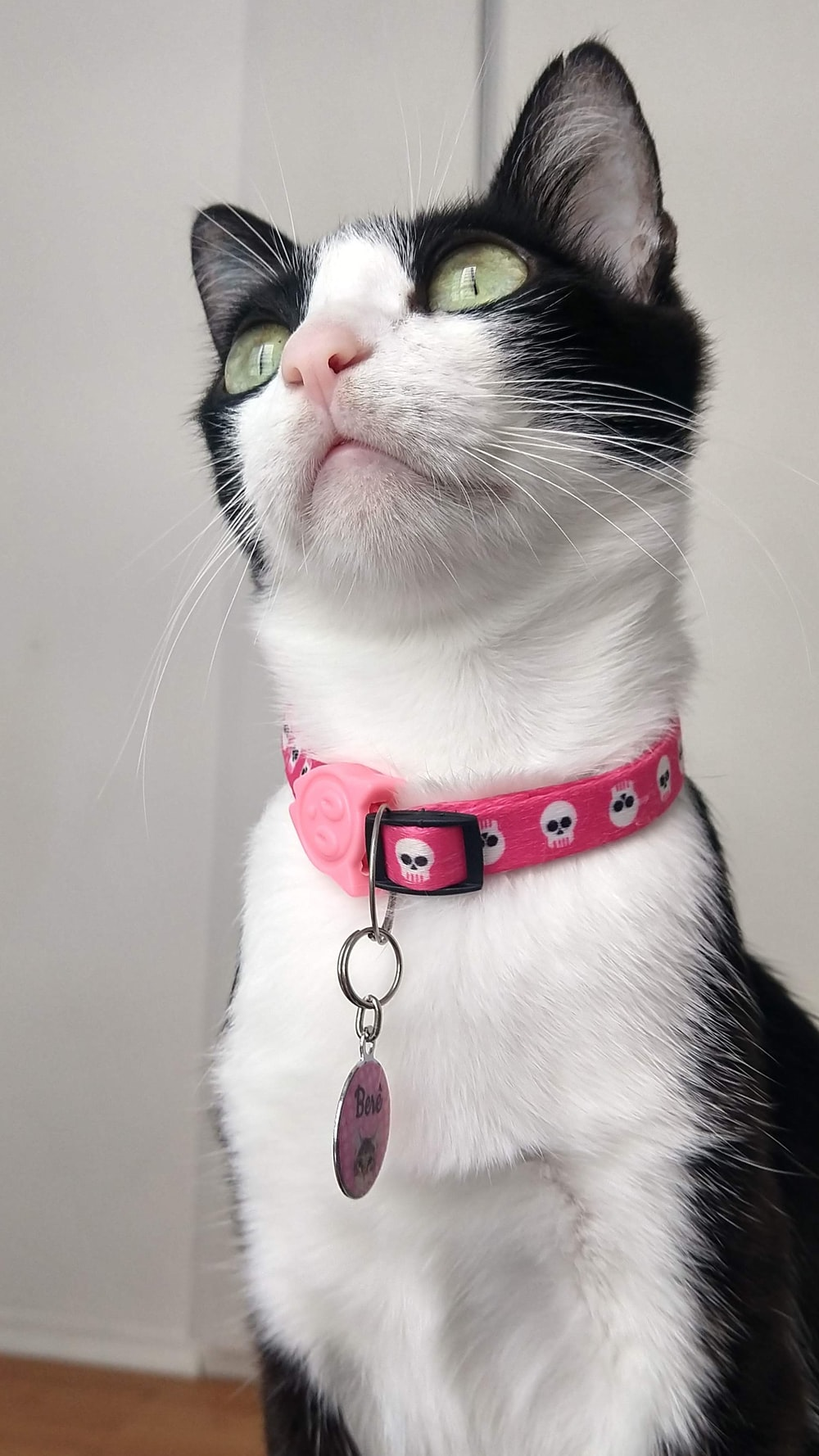 white and black cat with red collar