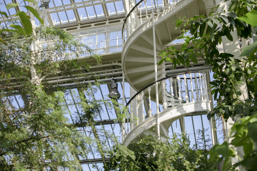 green plant on white spiral staircase