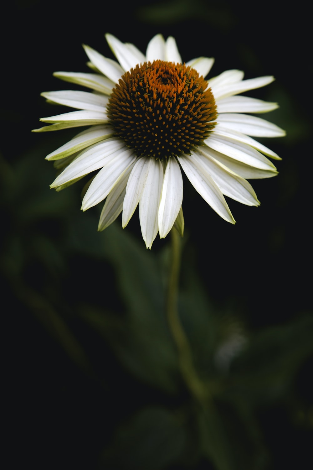 white and yellow daisy in bloom during daytime