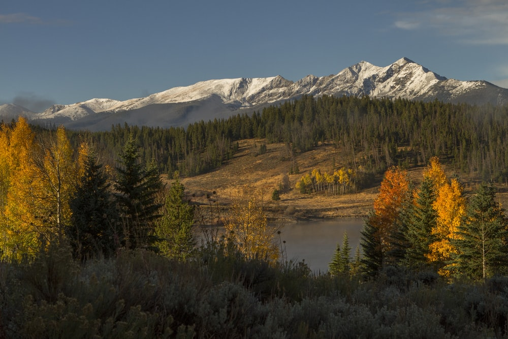 green and brown trees near snow covered mountain during daytime