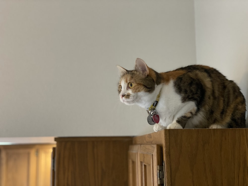 brown and white cat on brown wooden cabinet